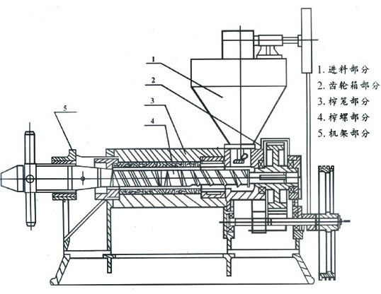 榨油机运转时,处理好的料胚从料斗进入榨膛。由榨螺的螺旋向里推进,进行压榨。因料胚在榨油机的榨膛内是在运动状态下进行的,在榨膛高压的条件下,料胚和榨螺、榨膛之间产生了很大的摩擦阻力,使物料之间产生摩擦,产生相对运动。 榨螺的根园直径是逐渐增粗的。当榨螺转动时,螺纹使料胚既能向前推进,又能向外翻转,同时靠近榨螺纹表面的料层还随着榨轴转动,这样在榨膛内的每个料胚微粒都不是等速的,同方向运动,而且在微粒之间也存在着相对运动。由摩擦产生热量又满足了榨油工艺操作上所必须的一份热量,有助于促使料胚中蛋白质热变性,破坏了